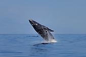 Whale Stock Photos