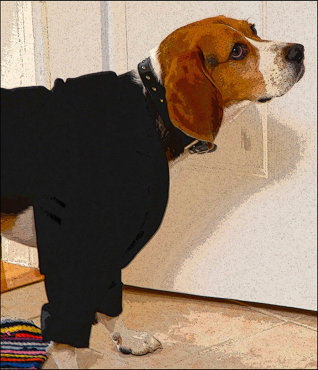 Wedding Beagle / Catalog #223