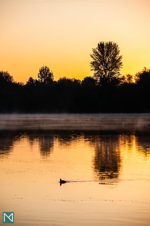 Mist at sunrise, Rickmansworth Aquadrome