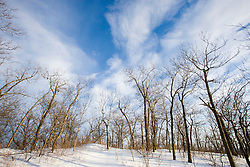 Bare trees and blue sky in Hadley, Massachusetts.  Mount Holyoke in Skinner State Park.  Metacomet-Monadnock Trail. New England Trail
