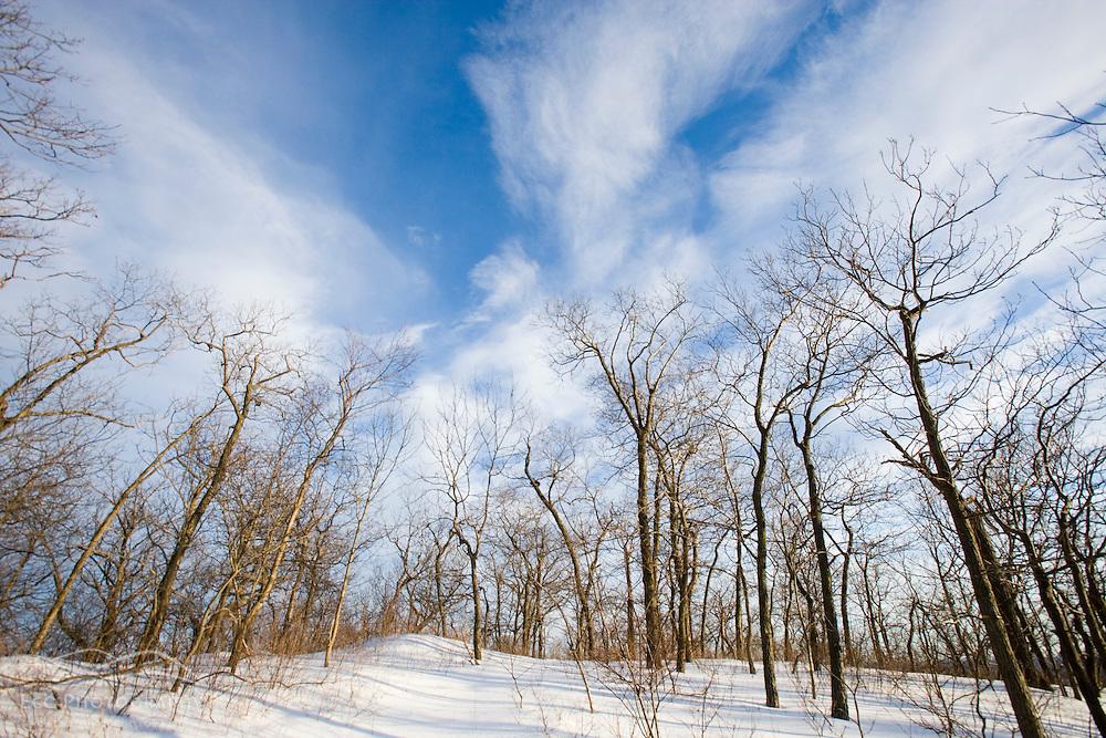 Bare trees and blue sky in Hadley, Massachusetts.  Mount Holyoke in Skinner State Park.  Metacomet-Monadnock Trail. New England Trail