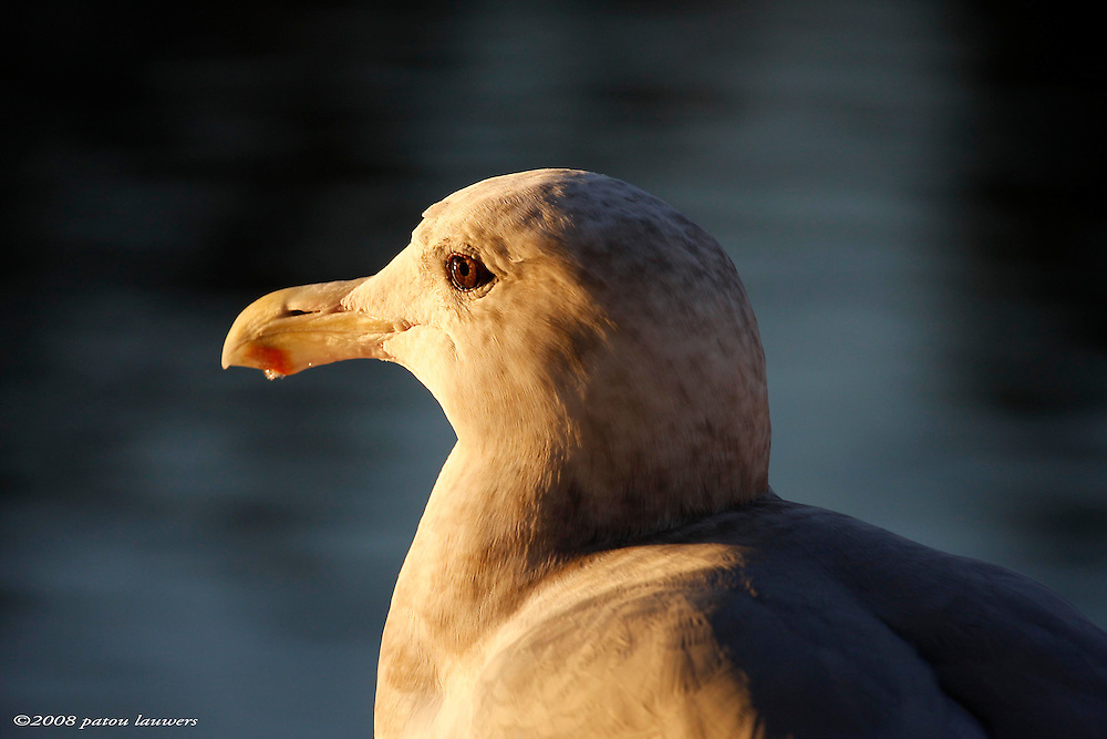 seagull near ocean