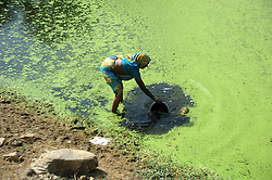 April 26, 2017 - Allahabad, Uttar Pradesh, India - Allahabad: A woman fills water in a pot to drink from a dirty pond at Shankargarh area in Allahabad. During Summer approx all well and handpump are parsed so villagers using pond's water to drink. (Credit Image: © Prabhat Kumar Verma via ZUMA Wire)