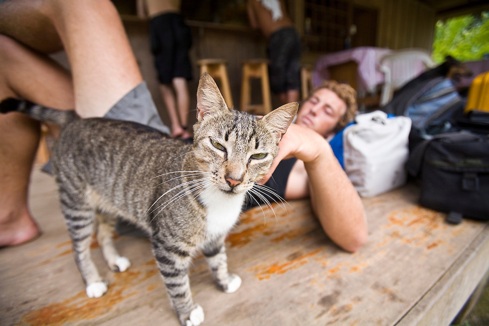 A tired surfer relaxes with a local cat in the small town of Drakes Bay while waiting for the flight out on the chartered flight.