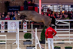 048, Rolex Du Genet<br /> BWP Hengstenkeuring -  Lier 2020<br /> © Hippo Foto - Dirk Caremans<br />  17/01/2020