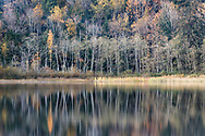 Fall foliage and tree reflections at Deer Lake in Sasquatch Provincial Park, British Columbia, Canada. Most of these trees are Alder, Birch, or Maple.