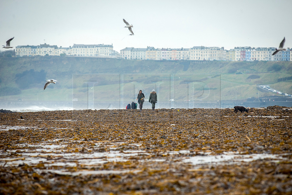 © Licensed to London News Pictures. 06/03/2018. Scarborough UK. Two women walk through the tons of seaweed washed on to the beach at the North Bay in Scarborough during storm Emma. Photo credit: Andrew McCaren/LNP