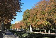 Trees in autumn colour, Paseo de la Argentina, El Retiro Park, Madrid, Spain