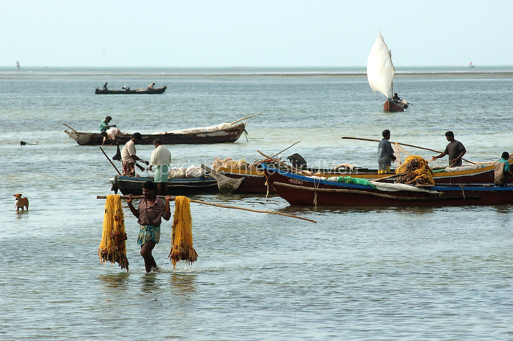 Sri Lanka. Sailing boats on Jaffna lagoon. The dog has also been fishing. Take a close look! 2004.