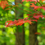 """Tip in Red""<br />