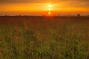 Sunrise on the tall grass prairie<br /> Tolstoi Tall Grass Prairie Preserve<br /> Manitoba<br /> Canada