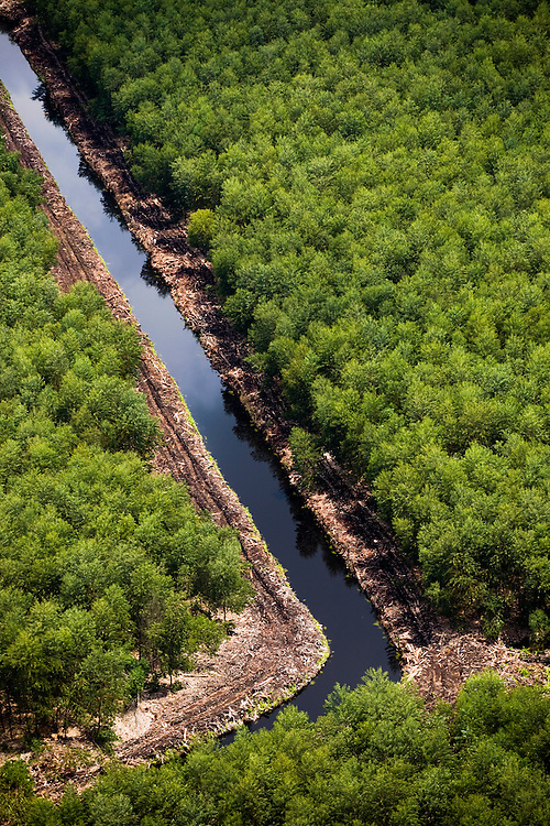 Acacia plantations near Sumatran tiger habitat, Riau, Indonesia, Aug. 30, 2008..Daniel Beltra/Greenpeace