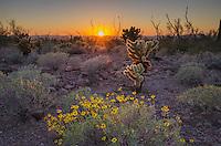 Sunset over the Sonoran Desert of Kofa National Wildlife Refuge Arizona