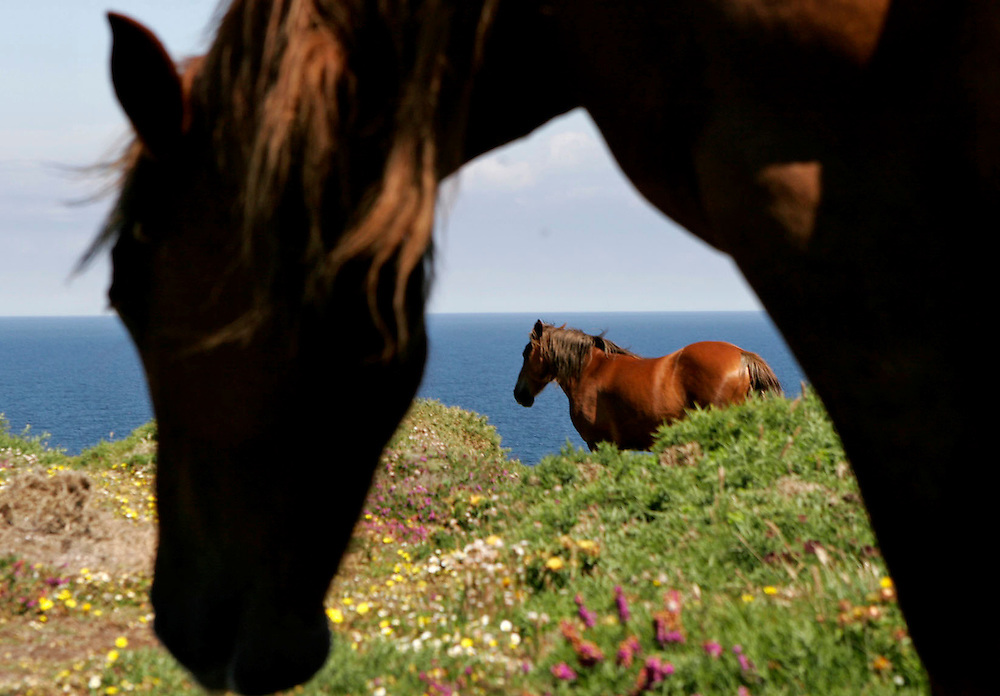 Horses by the sea.