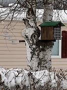 My home is my castle: Mon chez- moi pour toi et moi avec nichoir... Cocooning à la mode camping. Mein Zuhaus für dich und mich! Mit Birke, Schnee und Vogelhäuschen. © Romano P. Riedo