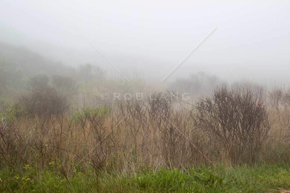 grasses and bushes on a foggy day in Montauk