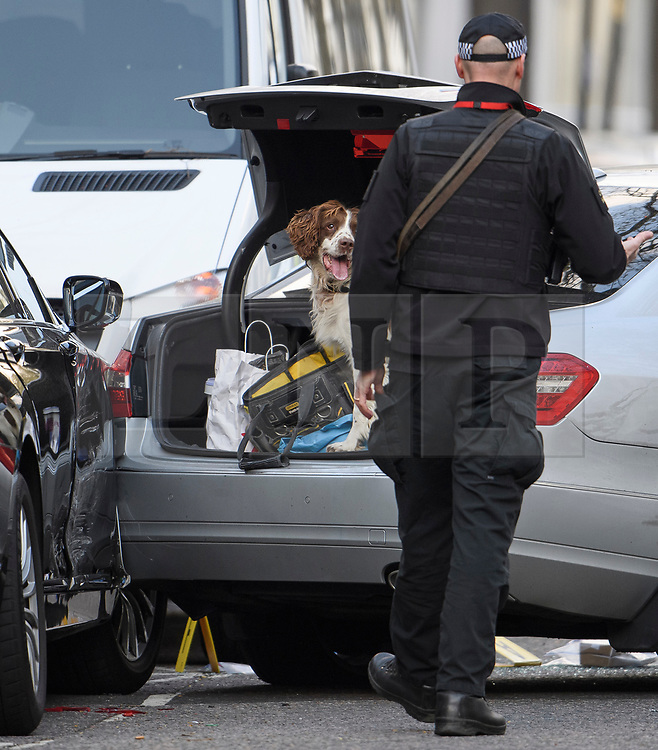 © Licensed to London News Pictures. 13/04/2019. London, UK. A police sniffer dog is used to search the boot of a car at the scene in Holland Park after shots were fired near the Ukrainian embassy. Photo credit: Ben Cawthra/LNP