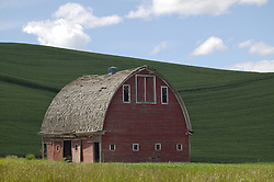 A barn sits below a hill of wheat in the Palouse area, Washington.