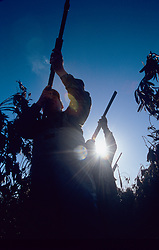 Stock photo of the silhouette of three men taking aim from a field