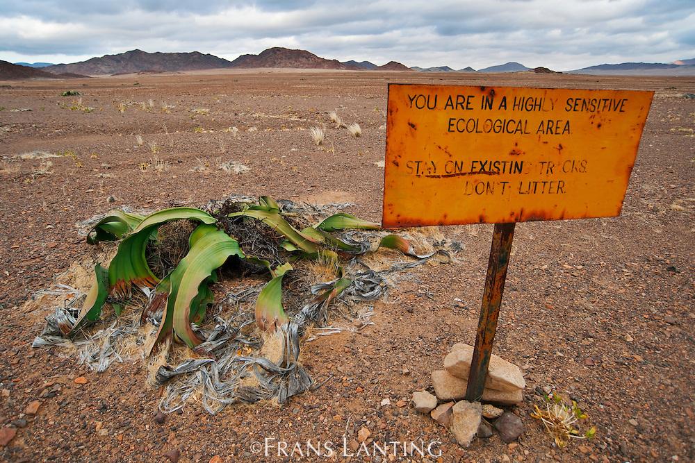 Welwitschia plant and roadsign, Welwitschia mirabilis, Messum Crater, National West Coast Recreation Area, Namibia