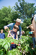 Charlie, co-owner of Victory Farm, helps a CSA member root for potatoes at their annual CSA picnic, where all the CSA members are invited to the farm to see how and where their food is grown.