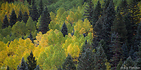 Wall of Fall. San Juan National Forest, Colorado - 9/30/2011.