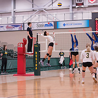 4th year outside hitter Ashlee Sandiford (1) of the Regina Cougars in action during Women's Volleyball home game on February 2 at Centre for Kinesiology, Health and Sport. Credit: Arthur Ward/Arthur Images
