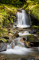 Along the Soleduck Trail in Olympic National Park, you can find small streams and waterfalls in the termperate rain forest.  The trees are massive and the green moss is beautiful.