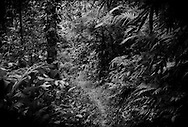 The Penan World: Trail through the Borneo rainforest that leads from the Penan settlements near Bario to Pa Tik, two days march on foot.   Most of the Penan in the settlements are from Pa Tik.  Near Bario, Sarawak, Malaysia.