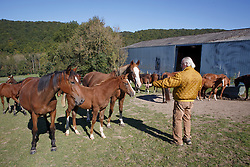 Lauwers Yves, (BEL)<br /> Prairie de Bauche avec :<br /> -  à gauche:  Io des Hayettes (Quartz Adelheid Z & Bacall des Hayettes par Hugo Gesmeray et Calbonny);<br /> - à droite : Quidame des Hayettes Z (Quidam de Revel & Calbonny), c'est la 3/4 sœur de Mozart des Hayettes qui à tourné avec Michael Withaker en GP;<br /> - au centre le foal mâle 2015 de Quidame des Hayettes : James des Hayettes par Banboula du Thot.<br /> Hayettes.Haras des Layettes - Falaën  2015<br /> © Hippo Foto - Dirk Caremans<br /> 02/10/15