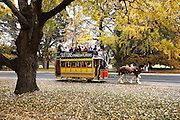 Horse Tram on Wendouree Parade during Ballarat Hertiage Weekend