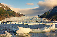 Late evening light on icebergs from Spencer Glacier in the Chugach National Forest in Southcentral Alaska. Summer.