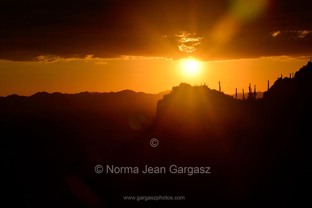 Saguaro cactus (Carnegiea gigantea) grow in the Sonoran Desert west of Gates Pass in Tucson Mountain Park, Tucson Mountains,Tucson, Arizona, USA.