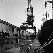 16/01/1960<br /> 01/16/1960<br /> 16 January 1960<br /> Horses for slaughter being loaded for export to the Netherlands from Dublin. Crane loading horses onto the &quot;City of Waterford&quot;.