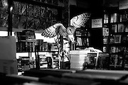 """Photographer catches wild animals in Urban spaces <br /> <br /> Photographer Jason McGroarty who captured these wild animals in urban spaces said  """"I will always remember the moment that I came into contact with a wild fox whilst walking a dimly lit street on the outskirts of my hometown. Through project Totem I want to capture that heart-stopping moment when the wild breaches the barriers of the big city and boldly reminds us that we are not as sage as we would like to think, that the unexpected should be expected'<br /> <br /> jason love of wild animals grew his photographer project in capturing these animals outside there normal enviroment <br /> <br /> """"I didn't have to manipulate the animals at all, I wanted them to be seen as they would be in the context of each image and so the hard part came when I had to manipulate the surroundings to suit the unique symbolism's of each animal. Some of the animals featured in Project Totem are looking at you, placing the viewer in the image and others take a more candid approach with the animals acting as they would in their natural surroundings""""<br /> <br /> Almost all of the images seen are shot in my hometown, Letterkenny, Donegal, Ireland.<br /> ©Jason McGroarty/Exclusivepix"""