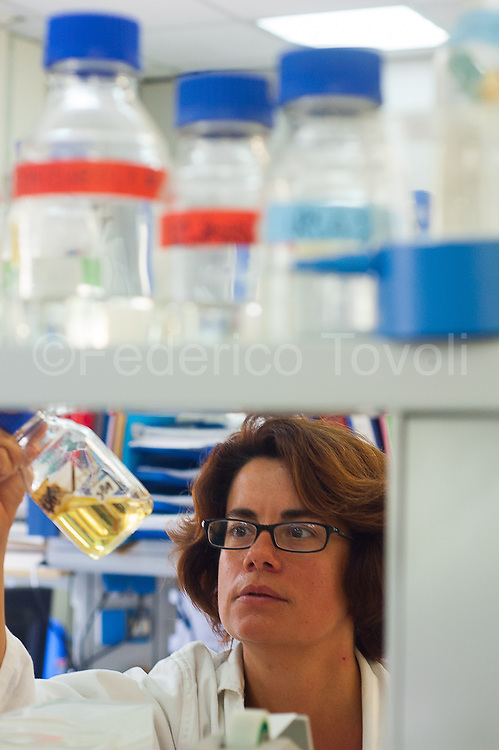 Dr Maria Ina Arnone in his laboratory.