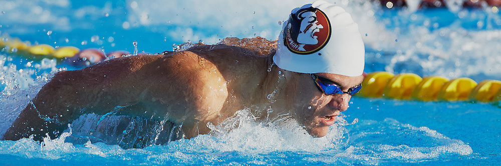 Tallahassee - FL - October 2013: <br /> Florida State Swimming and diving  returns to action in an ACC showdown against NC State and Georgia Tech at Morcom Aquatic Center on October 25, 2013 in Tallahassee, FL.  &copy;2013 Perrone Ford. (Photo by Perrone Ford / PTFPhoto.com)