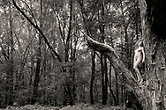 nude model in tree