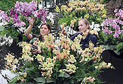 ©London News pictures. 03.02.2011. Tsuyeko Western (L) and Anne Rostek (R) add the final orchids to a display in the tropical glasshouse at Kew Gardens today (Thur). The launch of Kew Garden's Tropical Extravaganza. This theme celebrates the fact that 2011 has been designated the Year of the Forest by the UN. It is attempting to celebrate the rainforests' beauty as well as highlight the dangers that they are facing. The display includes varieties of Orchids, Anthuriums, Tillandsias and Aechmeas. Picture Credit should read Stephen Simpson/LNP