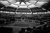 1965 - Goffs November Bloodstock Sales at the RDS Sale Paddocks
