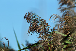 Dried Prairie Grasses make some interesting abstracts in the late summer and early fall