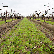 The fields and orchards around Madera, CA Please contact Todd Bigelow directly with your licensing requests.