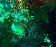 jamaica :: underwater (2012)