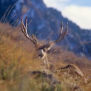 Wildlife Photography Samples