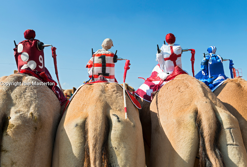 Robot remote controlled jockeys at camel races at Dubai Camel Racing Club at Al Marmoum in Dubai United Arab Emirates