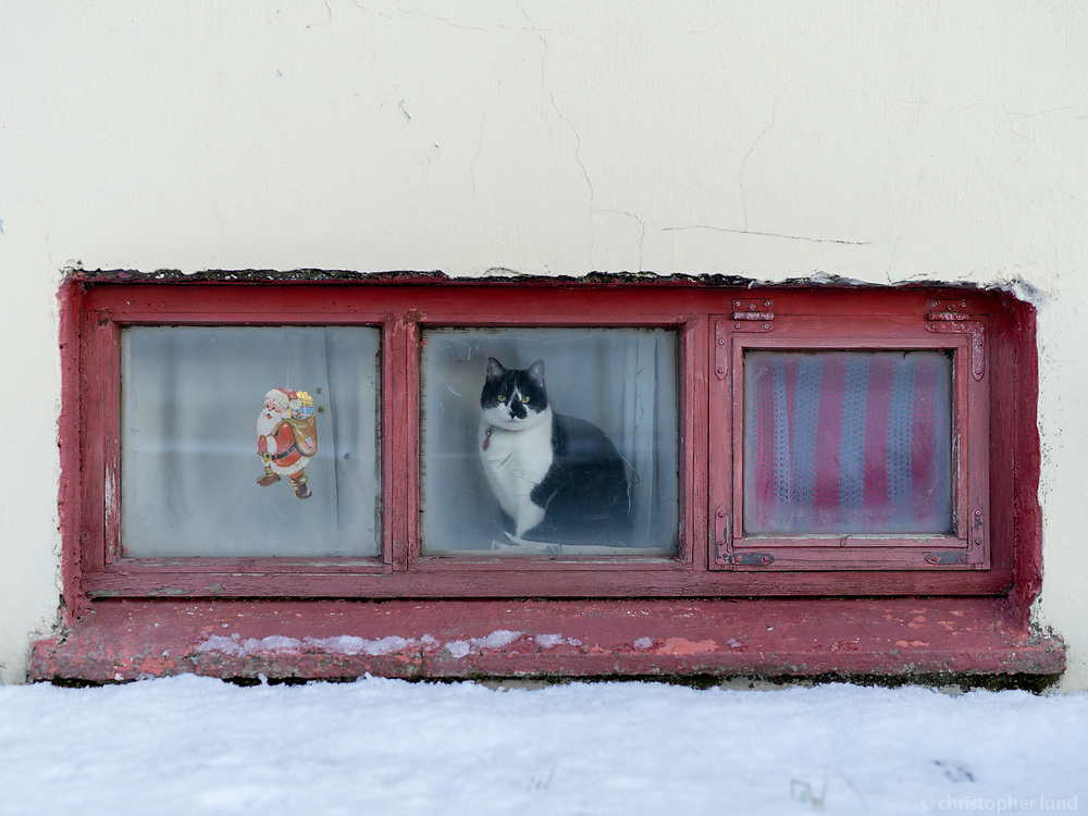 Cat inside a basement looking out the window. Vestmannaeyjar islands, Iceland.