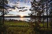 The vines of St Hubertus Estate Winery, Kelowna BC