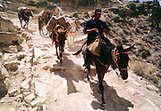 07 AUGUST 2000 - SUPAI, AZ: Jeremiah Chamberlain leads a muletrain carrying the US mail down the trail towards the village of Supai on the Havasupai Indian reservation in northern Arizona, Aug. 7. There are no roads or rail service into Supai, a village of 600 people on the floor of the Grand Canyon, west of the Grand Canyon National Park, so the mail is delivered by mule train. The wranglers who lead the mules down to the village haul everything from letters and postcards to fresh produce and refrigerated foods. The mail is hauled down the steep mountain slopes five days a week rain or shine. It normally takes about three hours to haul the mail down. The mule wranglers are self employed contractors and have to provide all of their own mules and equipment. Although the muletrain delivery of the mail is unusual, the Postal Service uses whatever mean necessary to deliver the mail, including sled dogs in Alaska and boats in other areas. Because of budget shortfalls, the US Postal Service is threatening to close the post office in Supai.   PHOTO BY JACK KURTZ