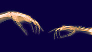 The Creation of Adam (Michelangelo) two hands under x-ray