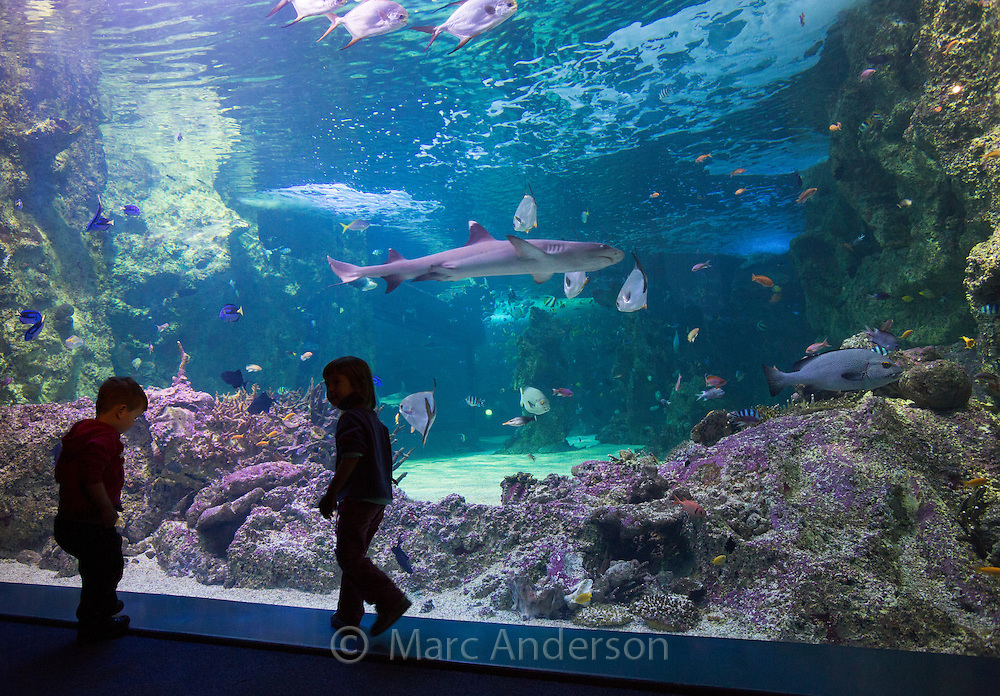 Silhouette of children looking at the Great Barrier Reef aquarium in the Sydney Sea Life Aquarium, Darling Harbour, Sydney, Australia